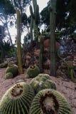 Diverses espèces cultivées de cactus Photo stock