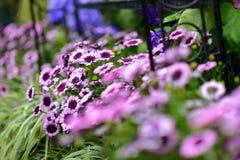 Diverses espèces de fleurs colorées fleurissant pendant le ressort dans le domaine Wintergardens d'Auckland Photos libres de droits