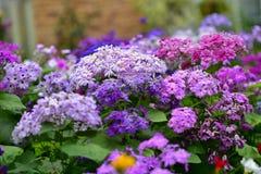 Diverses espèces de fleurs colorées fleurissant pendant le ressort dans le domaine Wintergardens d'Auckland Photo libre de droits