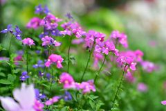 Diverses espèces de fleurs colorées fleurissant pendant le ressort dans le domaine Wintergardens d'Auckland Photos stock