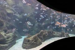 Diverses espèces de poissons chez Cretaquarium à Héraklion, Crète - Grèce photos libres de droits