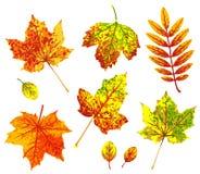Diverses feuilles d'automne d'isolement sur le fond blanc images libres de droits