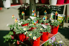 Diverses fleurs à vendre au marché Image libre de droits
