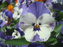 Diverses fleurs 1 Image libre de droits
