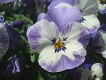 Diverses fleurs 2 Photo libre de droits