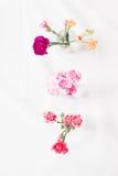 Diverses fleurs images libres de droits