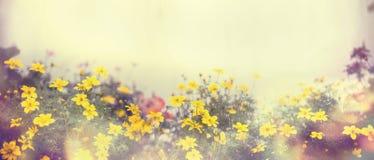 Diverses fleurs colorées de ressort au soleil, tache floue, site Web de bannière, frontière Photographie stock libre de droits