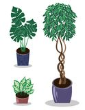 Diverses plantes d'int?rieur mises en pot centrales mises en pot de jardin Le vecteur a plac? les usines mises en pot illustration de vecteur