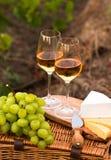 Diverses sortes de fromage, deux verres de vin blanc dans le jardin Images libres de droits