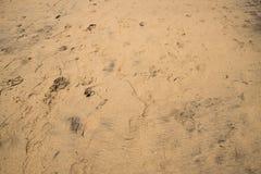 Diverses textures et empreintes dans à sable jaune lisse photographie stock libre de droits