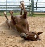 Diversión del caballo Fotografía de archivo libre de regalías