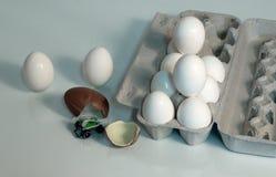 Diversión del cartón del huevo Fotos de archivo