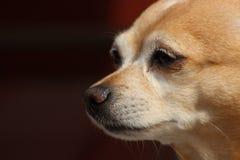 Diversión del perrito Fotografía de archivo libre de regalías