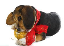Diversión del perrito con la Navidad imagenes de archivo