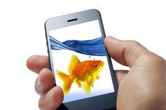 Diversión del teléfono celular del pez de colores Fotos de archivo libres de regalías