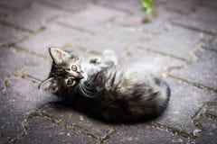 Diversión felina, gatito con las hojas, gatito que juega en la calle Fotos de archivo libres de regalías