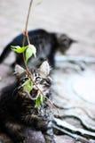 Diversión felina, gatito con las hojas, gatito que juega en la calle Foto de archivo libre de regalías