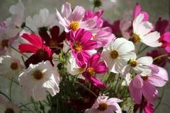 Diversicolored-Blumenstrauß Stockbilder