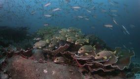 Diversidad de los pescados en Raja Ampat Indonesia 4k almacen de video
