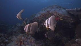 Diversidad de los pescados en Raja Ampat Indonesia 4k almacen de metraje de vídeo