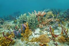 Diversidade alta de esponjas coloridas sob o mar Foto de Stock