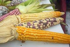 Diversidade mexicana do milho, milho branco, milho preto, milho azul, milho vermelho, milho selvagem e milho amarelo em um mercad Fotos de Stock