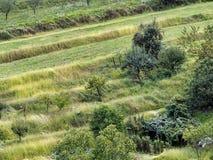 Diversifierad lantlig landsacpe - traditionellt jordbruk Inte monoc Fotografering för Bildbyråer