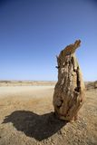 Diversifolia appassito di populus Fotografie Stock Libere da Diritti