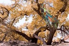 Diversifolia del Populus Immagine Stock Libera da Diritti