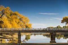 Diversifolious poplar trees Stock Photos
