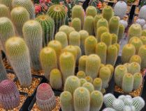 Diversiry of Cactus Royalty Free Stock Images