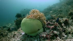Diversità del pesce in Raja Ampat Indonesia 4k archivi video
