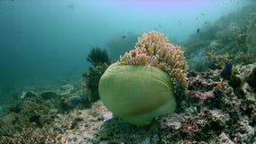 Diversità del pesce in Raja Ampat Indonesia 4k video d archivio