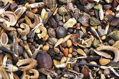 Diversità del seme Immagini Stock Libere da Diritti