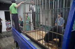 DIVERSITÀ DELL'AMBIENTE DELL'INDONESIA Fotografia Stock