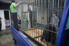 DIVERSITÀ DELL'AMBIENTE DELL'INDONESIA Immagini Stock
