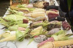 Diversità messicana del cereale, mais bianco, mais nero, mais blu, mais rosso, mais selvatico e cereale giallo ad un mercato loca Immagini Stock