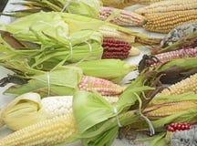 Diversità messicana del cereale, mais bianco, mais nero, mais blu, mais rosso, mais selvatico e cereale giallo ad un mercato loca Fotografie Stock
