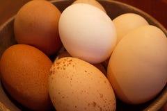 Diversità - uova libere dell'intervallo Fotografia Stock