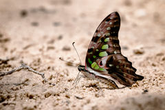 Diversité des espèces de papillon photo stock