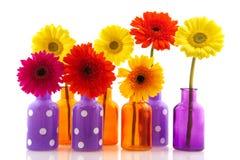 Diversiteit van kleurrijke Gerber stock foto's