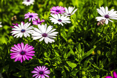 Diversity colorful flowers Stock Photography