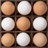 Diversity eggs, white and brown eggs Stock Photos