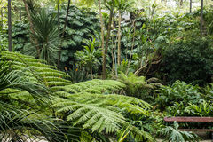 A diversity of ferns species in Estufa Fria (cold greenhouse), Lisbon, Portugal Stock Images
