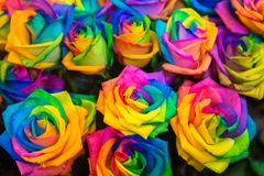 Diversity, joy, LGBT, rainbow, flowers background. Diversity, joy, LGBT, rainbow, flowers, gender equality background. Colorful variety of roses of all colors stock images