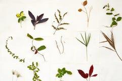 Diversity leaves Stock Photo