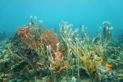 Diversity of sea sponges on the ocean floor Royalty Free Stock Photo