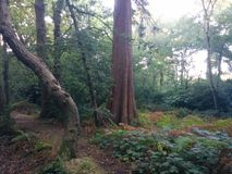 Diverso árbol en Forrest Fotos de archivo