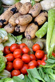 Diverso brote de las verduras frescas, del tomate, del loto y de bambú Imágenes de archivo libres de regalías