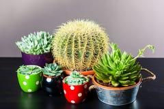 Diverso cactus cinco imagen de archivo libre de regalías